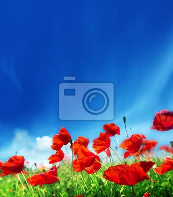 Fototapeta kwiaty maku i słoneczny dzień