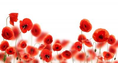 Fototapeta Kwiaty maku na jasnym rozświetlonym tle