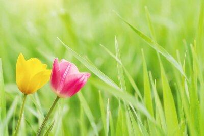 Fototapeta Kwiaty na Zielonej Trawie, Koncepcja Wiosny