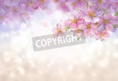 Fototapeta Kwitnące gałęzie drzewa Sakura, wiosna bokeh.