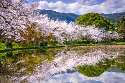 Fototapeta Kyoto, Japonia wiosną w Arashiyama District.