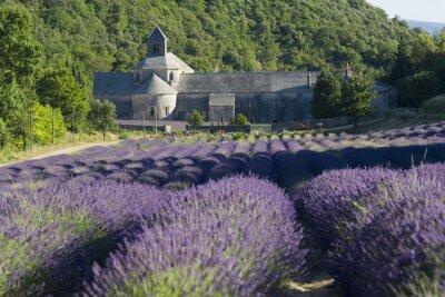 Fototapeta L 'Abbaye de Senanque, Klasztor w Prowansji, Francja