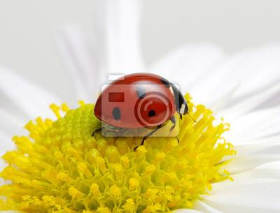 Ladybug on a flower