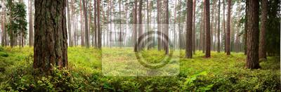 Fototapeta Lahemaa national park forest panorama