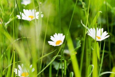 Fototapeta łąka lato