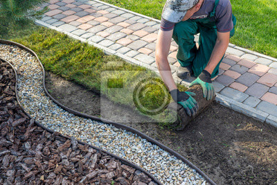 Fototapeta Landscape Gardener Laying Turf For New Lawn