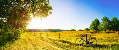 Fototapeta Landscape in summer with trees and meadows in bright sunshine