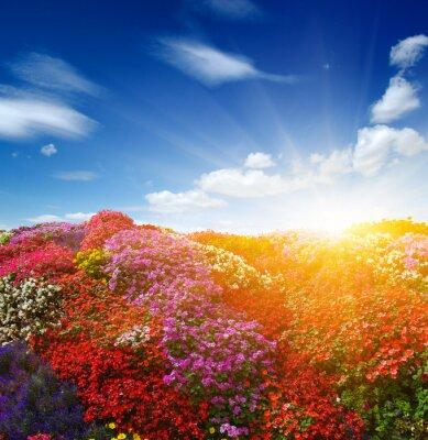 Landscape of flower field