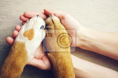 Fototapeta Łapy psa z miejsca w formie serca i ludzkiej dłoni bliska, widok z góry. Koncepcyjne wizerunek przyjaźni, zaufania, miłości, pomocy między osobą a psem