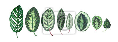 Large collection of tropical leaves isolated on white. Watercolor illustration.