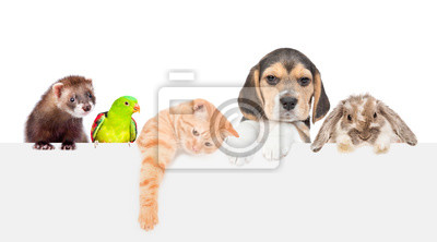Fototapeta Large group of pets  over empty white banner. isolated on white background. Empty space for text