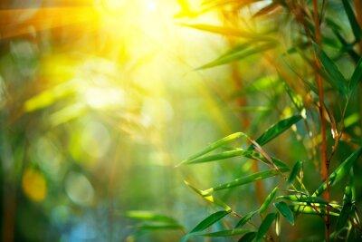 Las bambusowy. Narastający bambus nad zamazanym pogodnym tłem. Tle przyrody