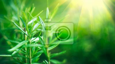 Las bambusowy. Narastający bambusa granicy projekt nad zamazanym pogodnym tłem. Tle przyrody