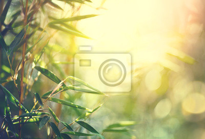 Las bambusowy. Uprawa bambusa w ogrodzie japońskim