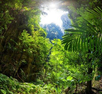 Fototapeta Las Dżungla