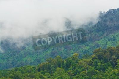 Fototapeta Las i mgła jako tło