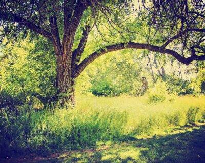 Fototapeta las lub park z drzew z liści jesienią zrobić z retr