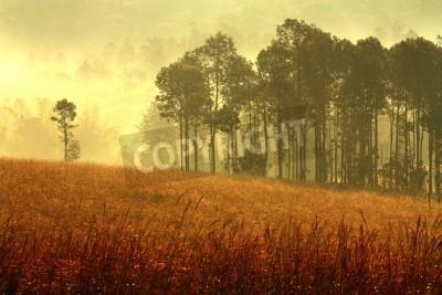 Fototapeta Las mgle na rano