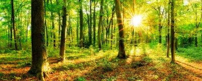 Fototapeta Las na wiosnę ze słońcem