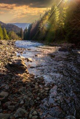 Fototapeta las rzeka z kamieni i mchu na zachodzie słońca