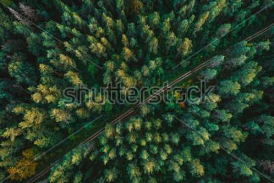 Fototapeta Las sosnowy z gory, jesień, droga leśna
