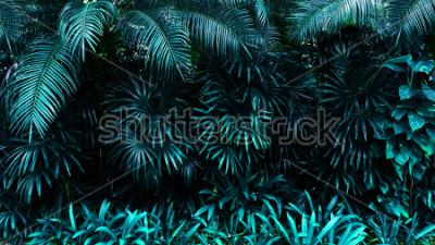 Fototapeta las tropikalny las liść w w tle. Wysoki kontrast.