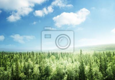 las w czasie zachodu słońca