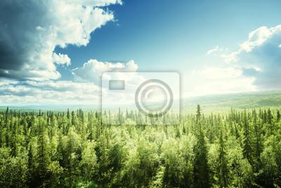 Fototapeta las w słoneczny dzień