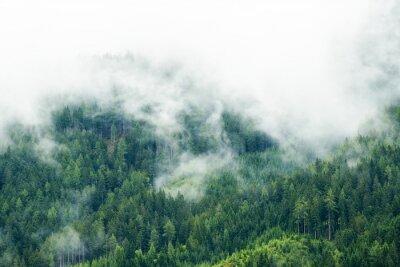 Fototapeta Las we mgle, niskie chmury iglaste, alpy austriackie