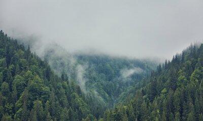 Fototapeta Las z drzewami iglastymi we mgle