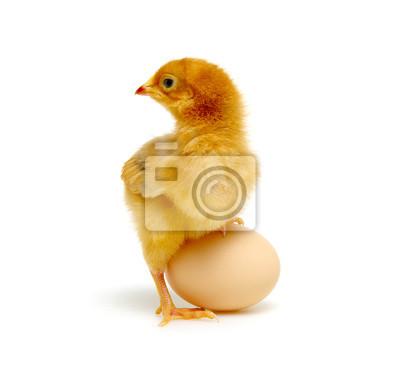 laska i jajko na białym
