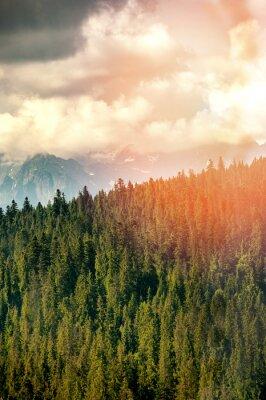Fototapeta lasów górskich objętych mgły