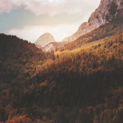 Fototapeta Lasów na zboczu góry