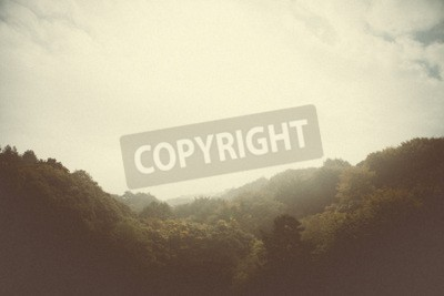 Fototapeta lasu zdjęć styl drzew i przyrody