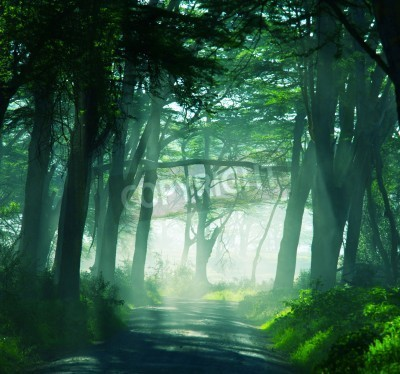 Fototapeta lasy deszczowe