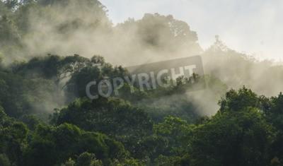 Fototapeta Lasy tropikalne wypełnione pary wodnej i wilgoci, park narodowy Khao Yai