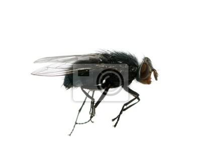 Fototapeta latać na biały