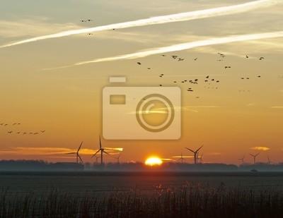 Latające ptaki o świcie w zimie