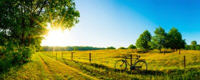 Fototapeta Latem krajobraz z drzew i łąk w słońcu