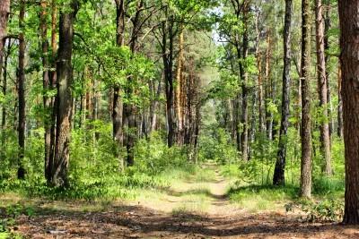 Fototapeta Latem mieszane lasu z przejścia, zielona trawa i drzew (HDR)