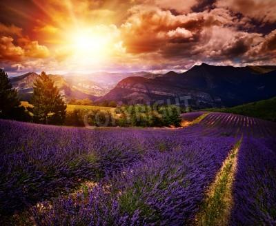 Fototapeta Latem słońca pola lawendy krajobrazu kontrastowych kolorach