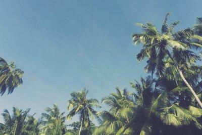 Fototapeta Lato czas egzotycznych tropikalnych palmy