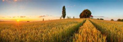 Fototapeta Lato panorama pole pszenicy wieś, rolnictwo