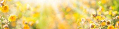 Fototapeta Lato, słońce, kwiat łąka - Banner