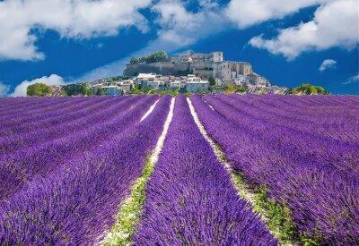 Fototapeta Lavande en Provence, prowansalskim miasteczku en France
