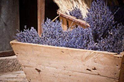 Fototapeta Lavender bunches selling in an outdoor french market