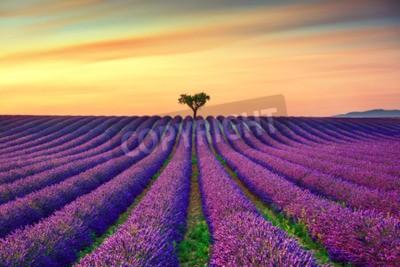 Fototapeta Lavender kwiaty kwitnące pole, samotne drzewa w górę na zachód słońca. Valensole, Provence, Francja, Europa.