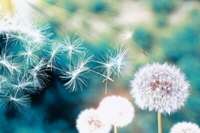 Fototapeta Letni krajobraz. Kwiaty.