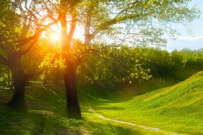 Fototapeta Letni krajobraz na zachód słońca lato - słoneczny kolorowy letni charakter