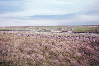 Fototapeta letni krajobraz pastwisk